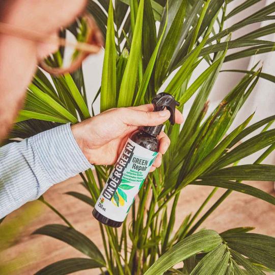 Green Repair Spray anwenden