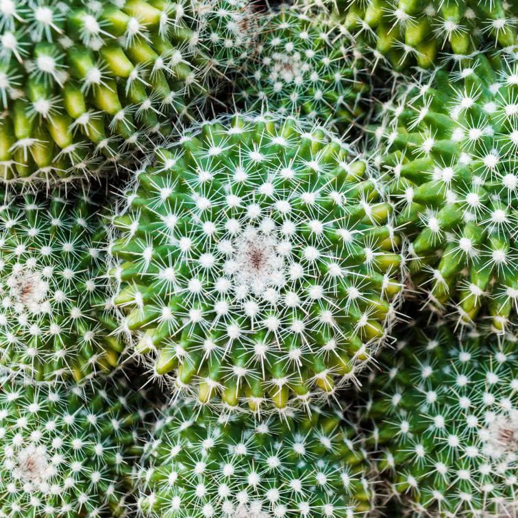 Wie pflege ich meinen Kaktus?