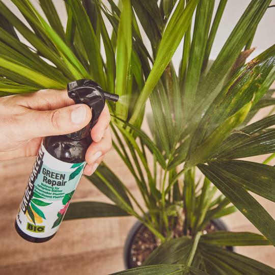 Repair Spray für Pflanzen mit braunen Blättern