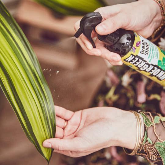 UNDERGREEEN Blattpflegespray für glänzende Pflanzen