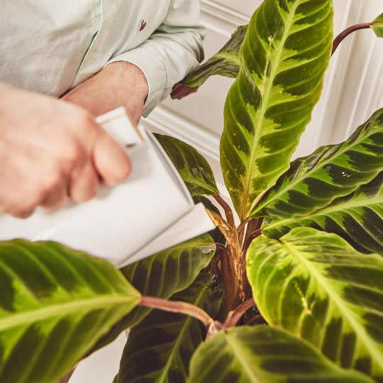 Grünpflanzen regelmäßig düngen und gießen