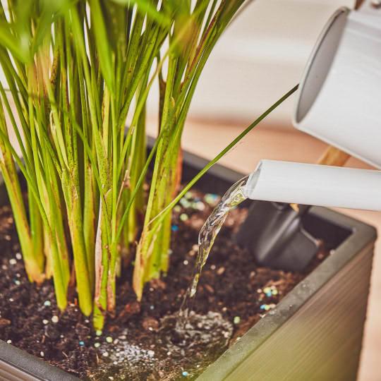 Pflanze nach dem Düngen gut gießen