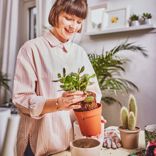 Pflanzen umtopfen für ein besseres Wachstum
