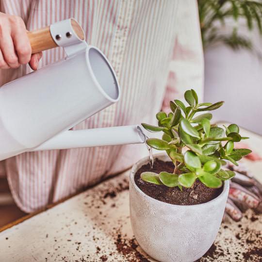 Pflanzen umtopfen und regelmäßig gießen