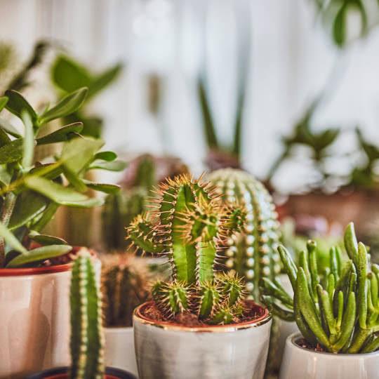 Kaktus Dschungel