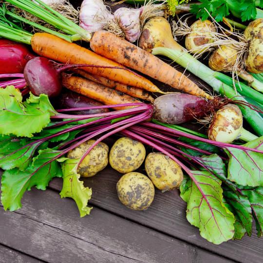 Gemüse ernten