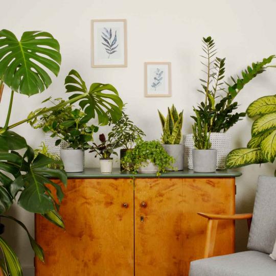 Grünpflanzen pflege