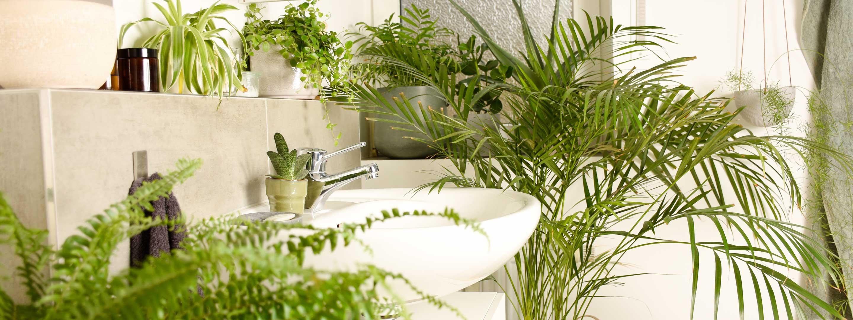 Die besten Pflanzen fürs Badezimmer und wie du sie richtig pflegst!